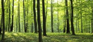 rural-forest